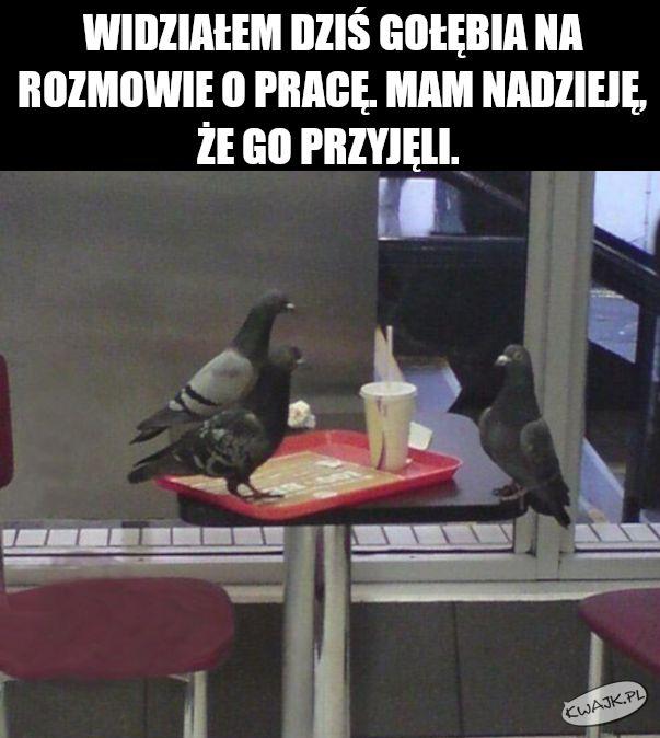 Widziałem dziś gołębia na rozmowę o pracę