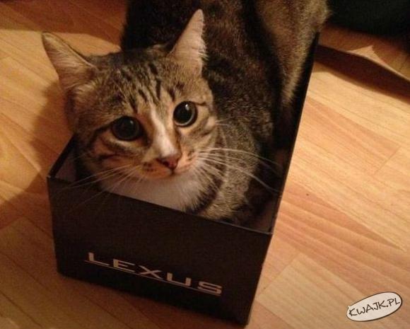 Nawet kot ma lexusa