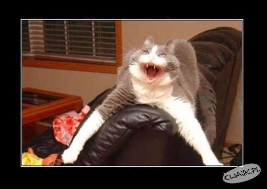 Przerażony kot