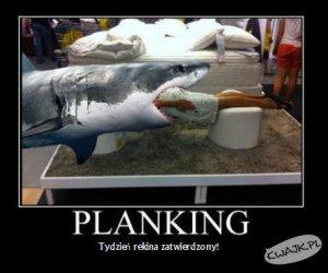 Tydzień rekina