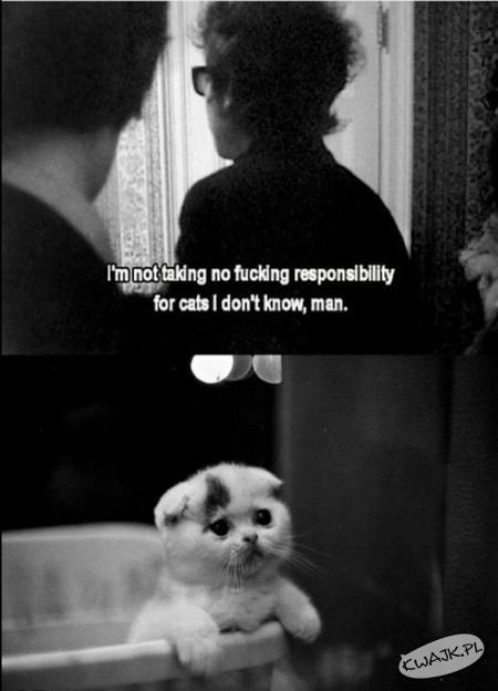 Nie biorę żadnej odpowiedzialności za koty, człowieku