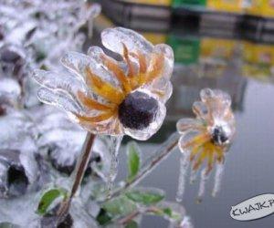 Mrożone kwiaty
