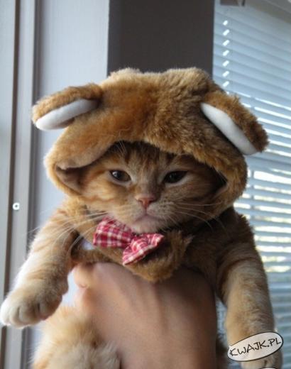Czapka na zimę dla kotka