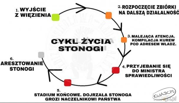 Cykl życia Stonogi