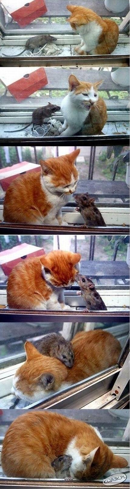 Jak szczur z kotem