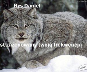 Ryś Daniel