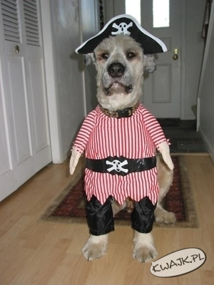 Uwaga na pirata!