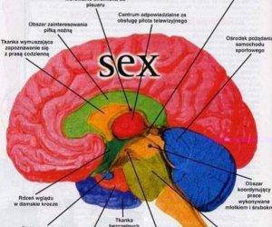 Mózg faceta