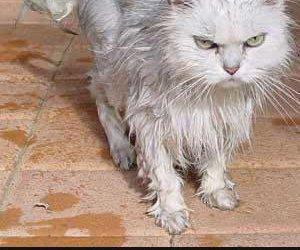 Zmokły kotek