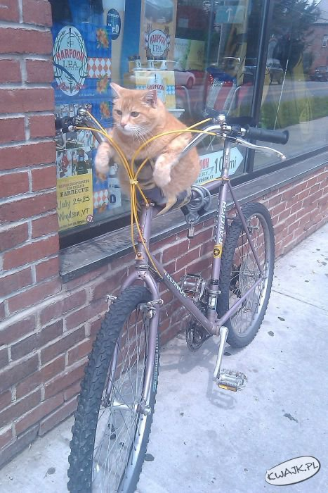Złodziej rowerów