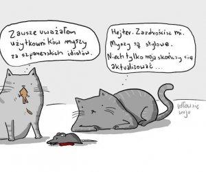 Koci użytkownicy