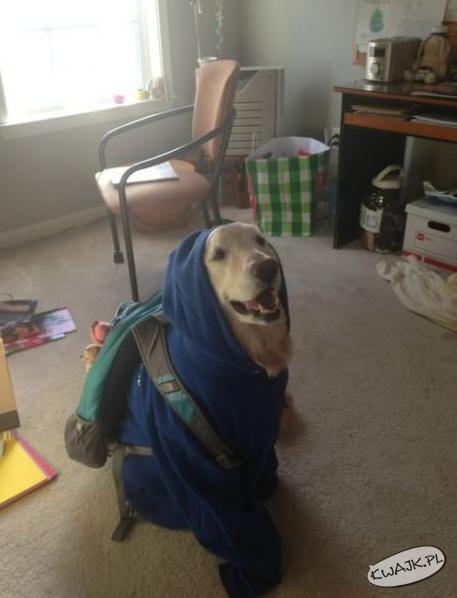 Gotowy do szkoły