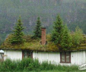 Drzewka w domku