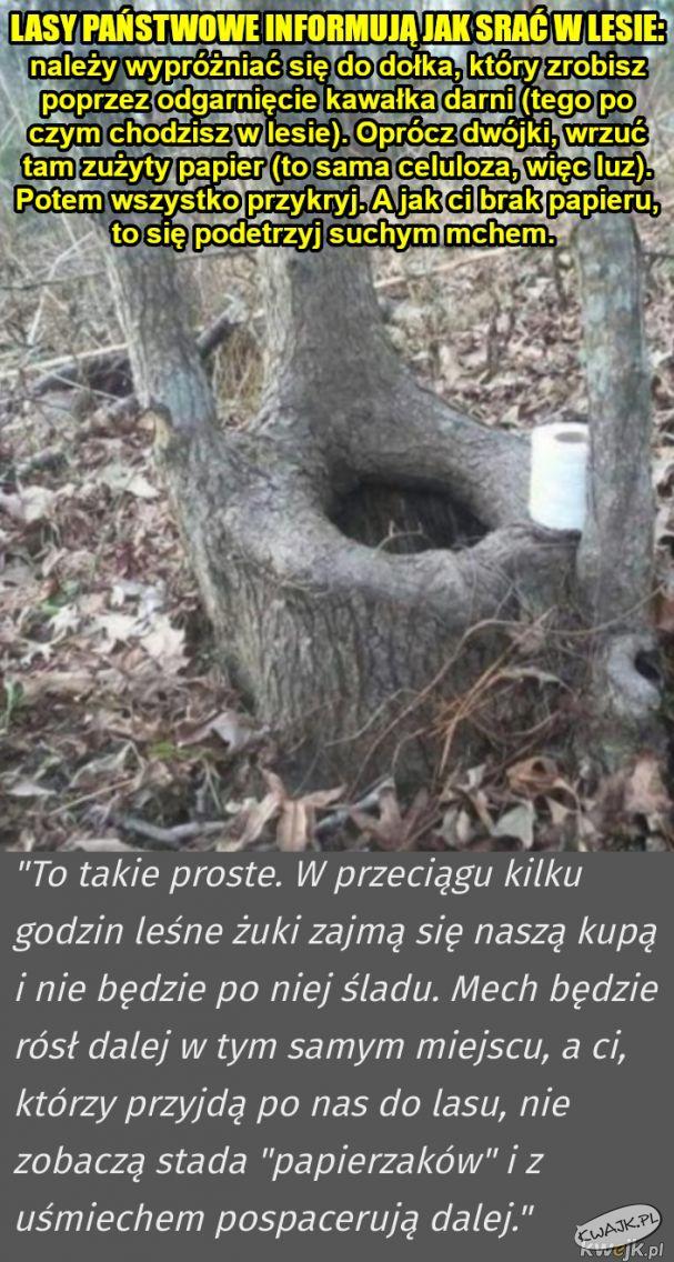 Lasy Państwowe informują, jak robić kupę w lesie