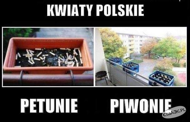 Petunie vs. piwonie
