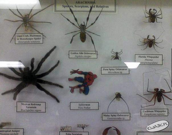 Różne gatunki