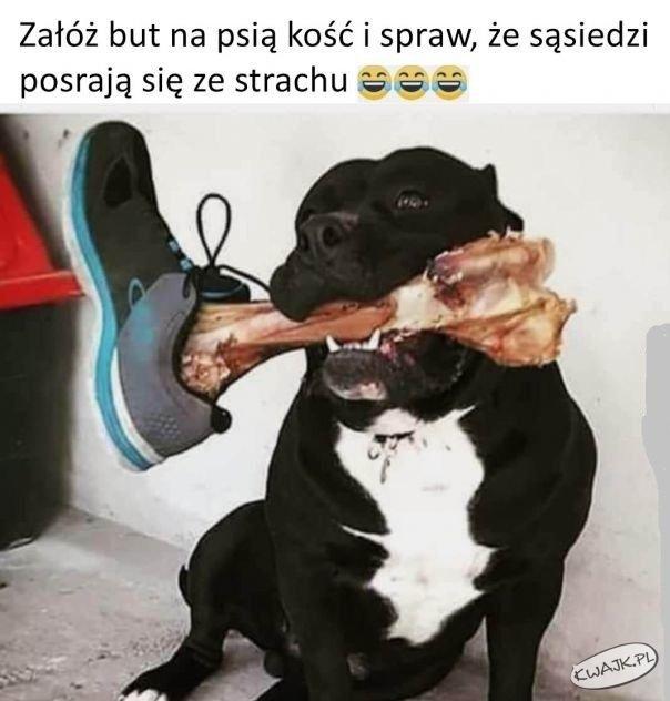 Załóż but na psią kośći i spraw, że sąsiedzi... ;-)