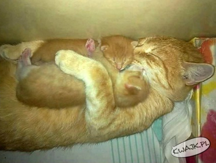 Matczyna miłość