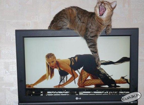 Zboczony kot