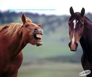 rzy kon do konia i mowi