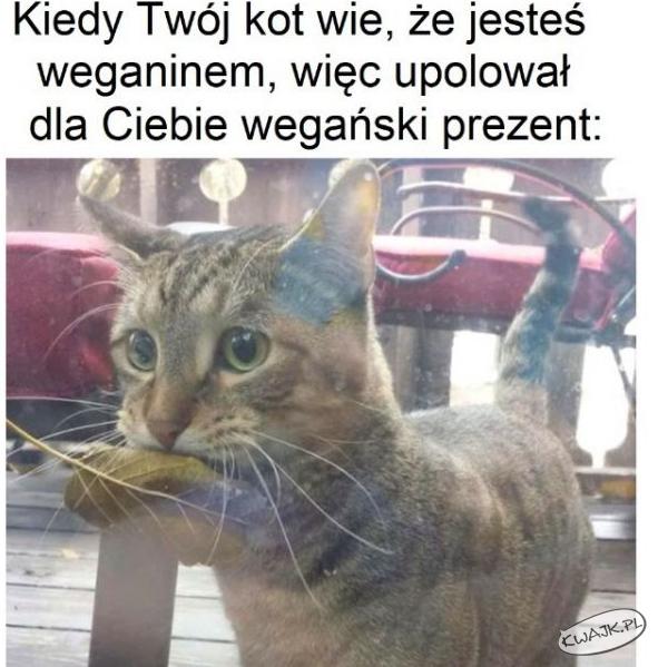 Kiedy twój kot wie, że jesteś weganinem...