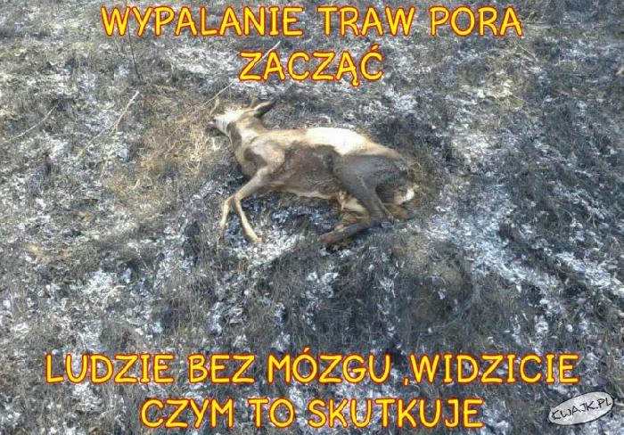 Ludzie, NIE wypalajcie traw!!!!