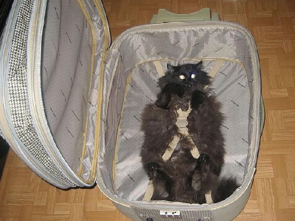 Kot przygotowany do transportu