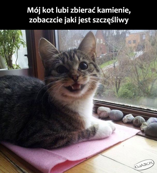 Mój kot lubi zbierać kamienie...