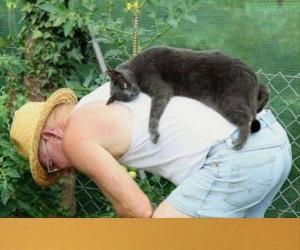 Wola kota