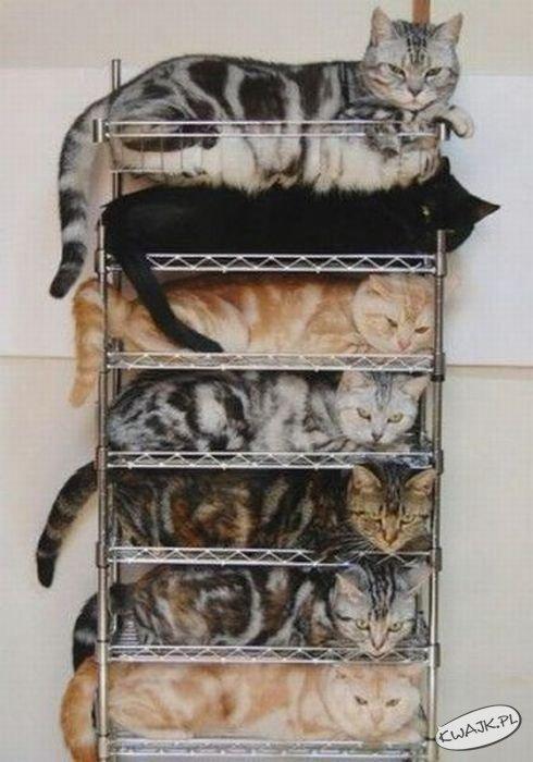 Łóżko wielopiętrowe dla kotów