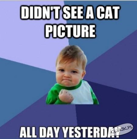 Nie widziałem wczoraj żadnego kociego zdjęcia
