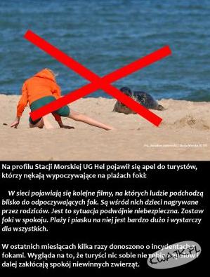 Bezmyślni turyści gnębią foki nad Bałtykiem