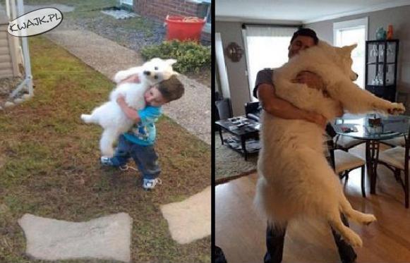 Dorastanie z psem