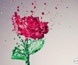 Nietypowa róża