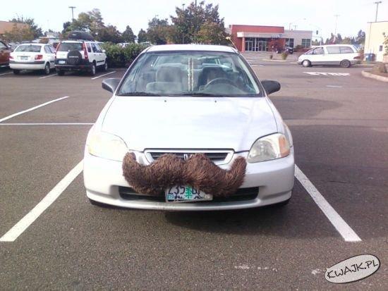 Auto z wąsem
