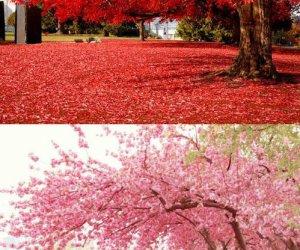 Zbliżająca się wiosna