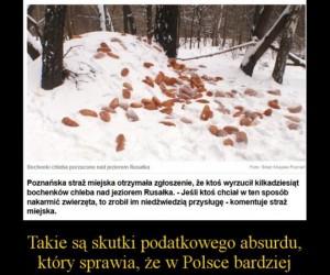 Polski absurd