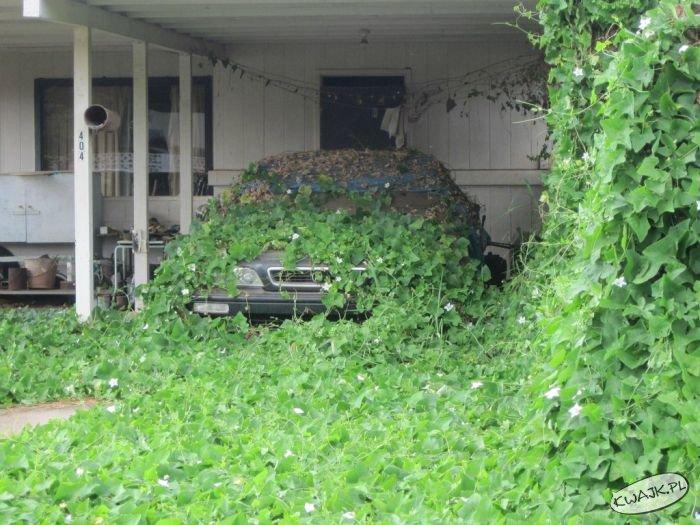 Nigdy nie lubiłam tego samochodu