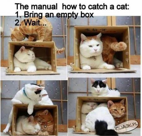 Jak złapać sobie kota
