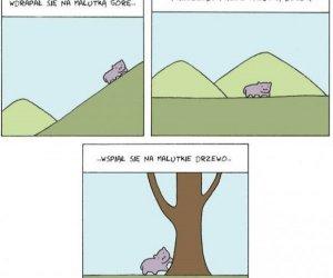Przygody małego hipopotamka
