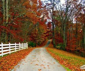 Jesień idzie