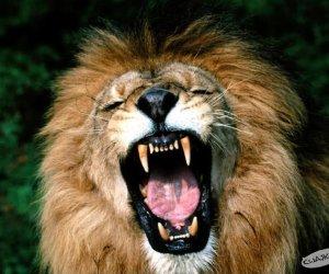 Nie drażnij lwa