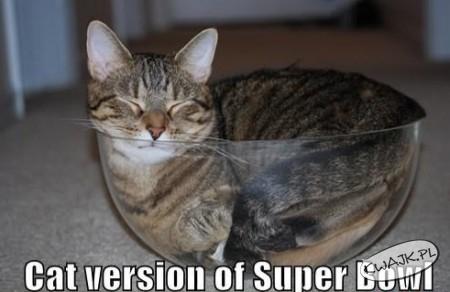 Superbowl dla kota