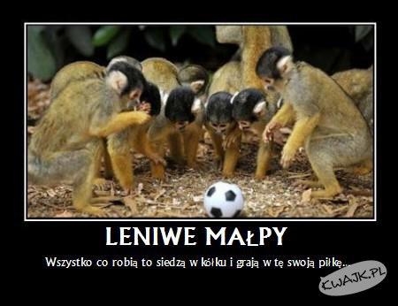 Leniwe małpy