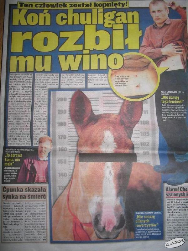 Koń chuligan