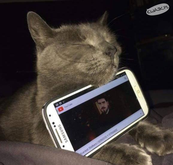 Kot zadowolony z nowego zajęcia