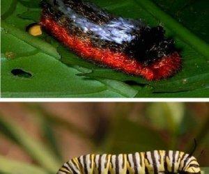 Kolorowe robaki