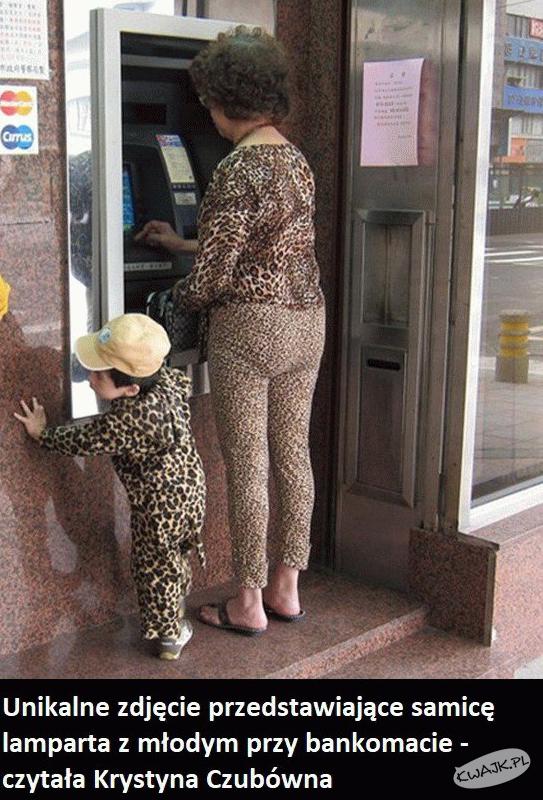 Samica lamparta z młodym przy bankomacie