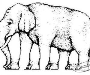 Ile nóg ma słoń