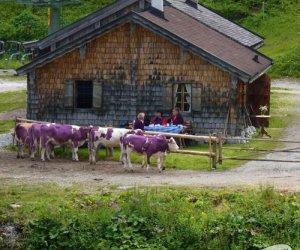 A tu się schowały krowy Milki!